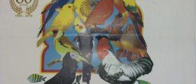Katalog Ornitološke Izložbe Zenica 2019