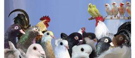 Katalog Državne Ornitološke Izložbe